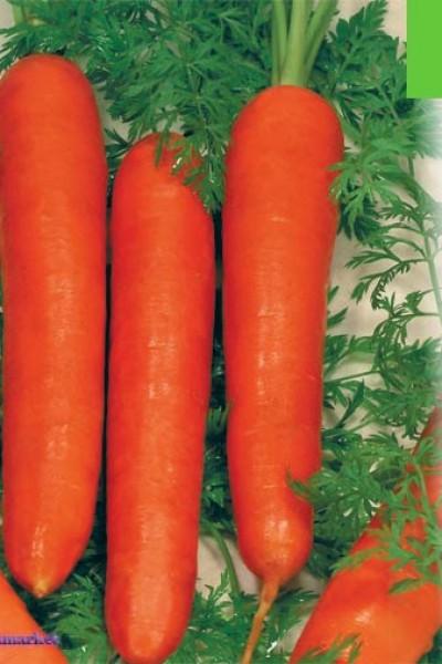 Выращивание редиса в открытом грунте: правила 74